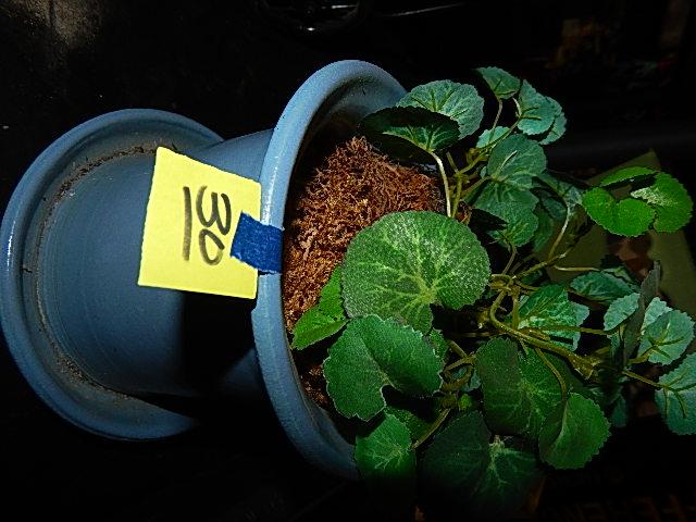 30-Artificial Plant